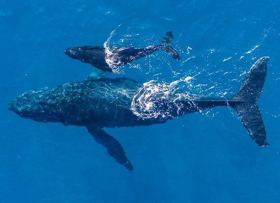 Meeres-Videos vom WWF