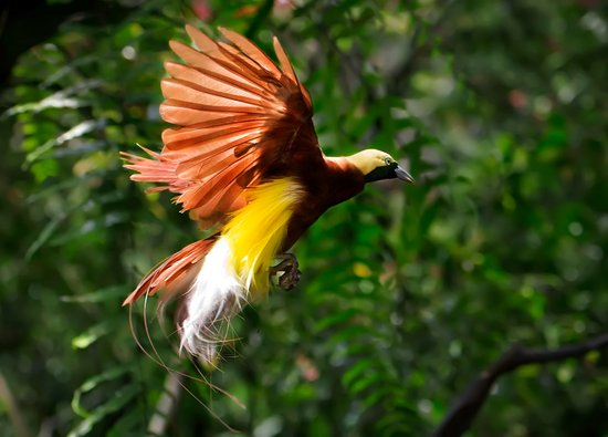 Tierisch schöne Paradiesvögel