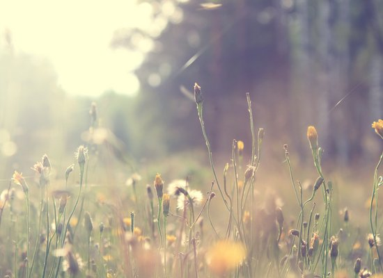 Poesie zum Anhören: Frühlingserwachen