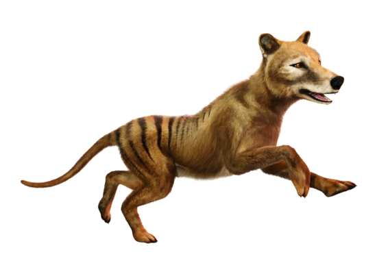 Was weißt du über ausgestorbene Tiere?