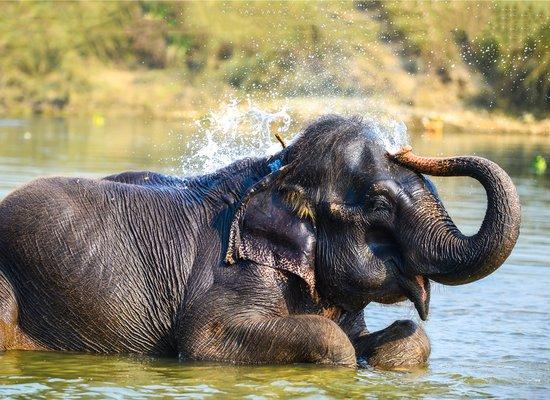 Elefanten auf der Spur ...