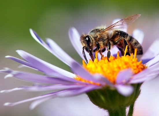 Bienen – Summ mit Gebrumm