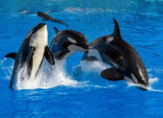 Alles über ... Orcas